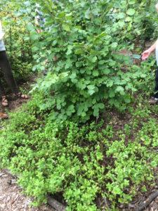 Forest Garden Guild